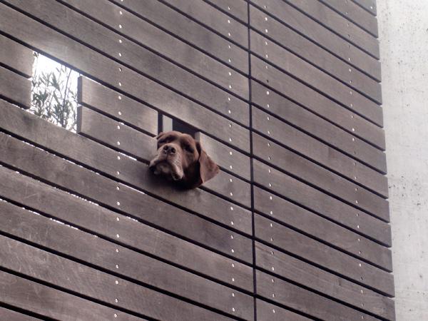 なんと、壁からワンちゃんのご挨拶!?そこを通り過ぎて数分……。