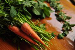 みずみずしい野菜