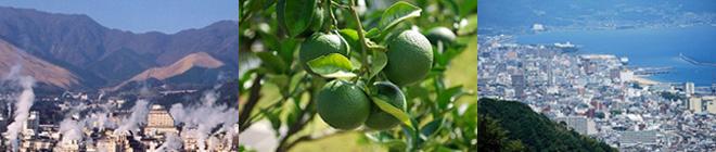 人気商品の柚こしょうも「ゆず」を使って生まれた商品の一つです。